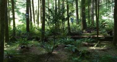 navrh lestni zahrady