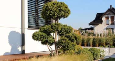 moderni zahrada Praha, zahradni architekt praha